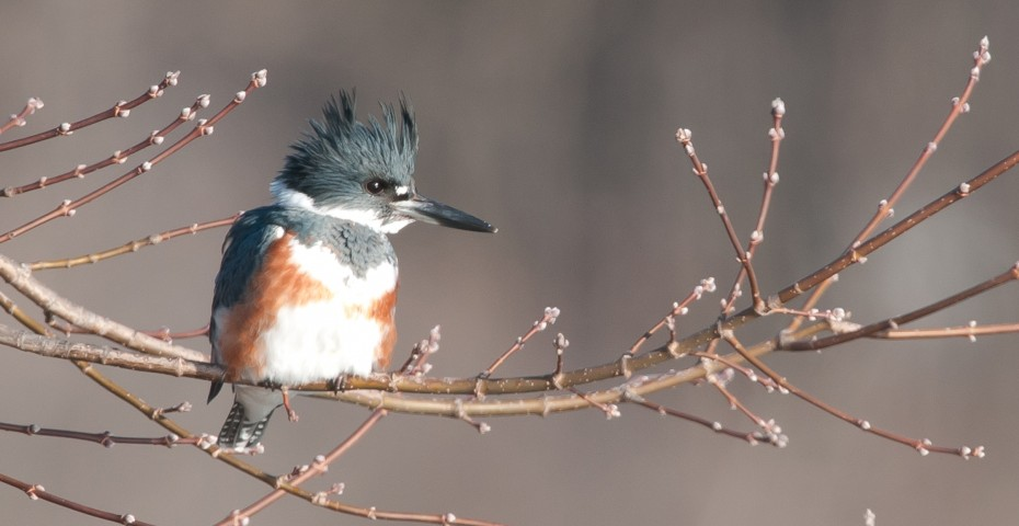 Rare Species Of Birds Rare Species Of...