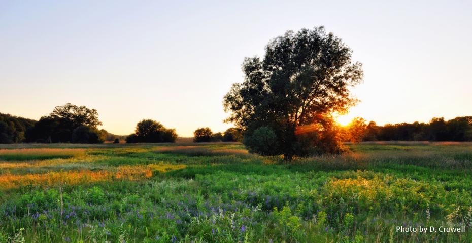 Green field, tree