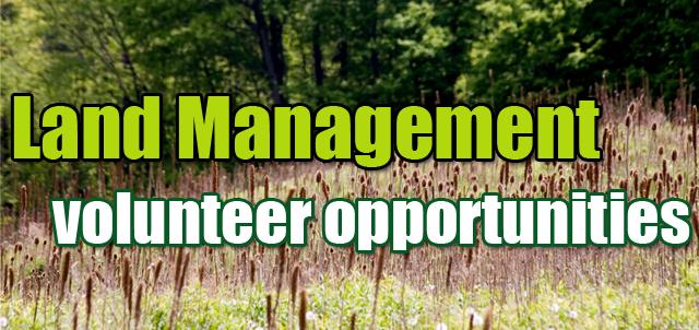 Land Management volunteer opportunities, tall grass