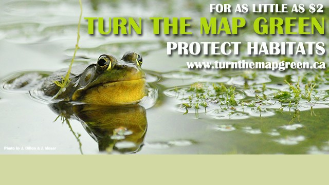 For as little as $2 TURN THE MAP GREEN protect habitats, www.turnthemapgreen.ca, frog in the pond