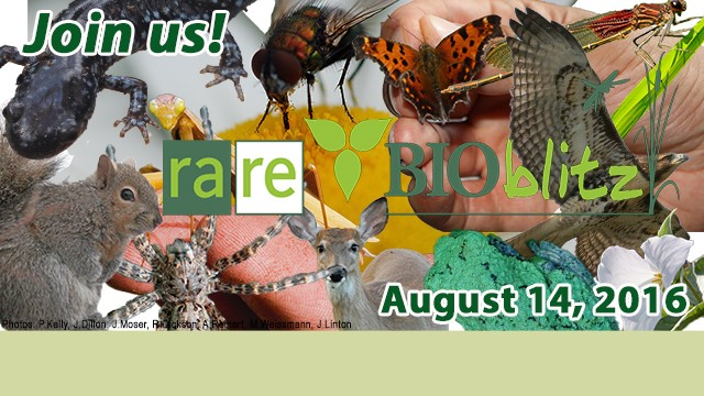 Join us! rare Logo, BIO blitz, August 14, 2016, spider, squirrel, lizard, fly, butterfly, eagle, flower, deer, dragonfly