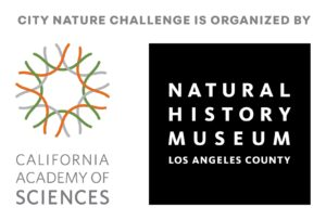 California Academy of Sciences and The Natural History Museum of Los Angeles County